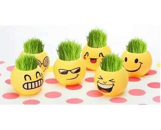 Mini Indoor Anti Radiation Pot Plant (Smiley)
