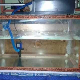 Di jual aquarium ukuran 60 fulset tinggl pakai