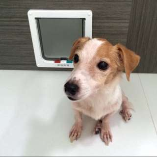 Personal Pet Door Suits HDBs / BTO