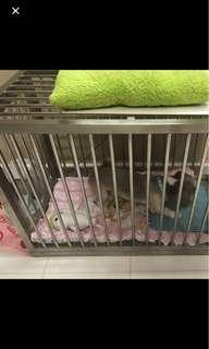 Pet cat dog cage