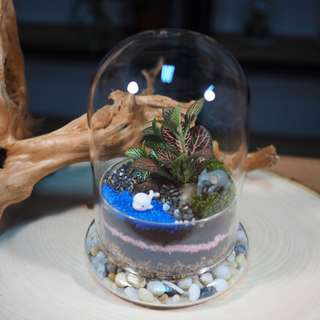 Domo Terrarium (Small)- DMJoy