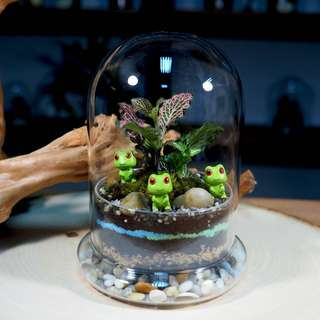 Domo Terrarium (Small) - DM1