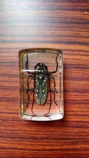 🚚 昆蟲標本