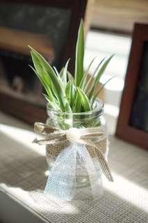 Small plant deco (mini glass jar)