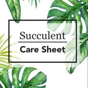 Succulents & Concrete Planters