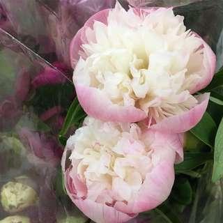 Peonies Bridal Bouquet / Wedding Fresh Flower Package
