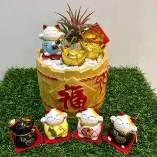 招财猫 Fortune cat In Gold pot 福 Airplant