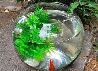 (送飼料)透明圓形魚缸寬約30公分高約26公分