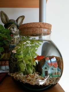 [現貨]LED花園小魚缸