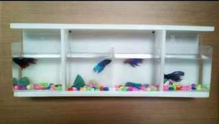Aquarium ikan cupang dan rak