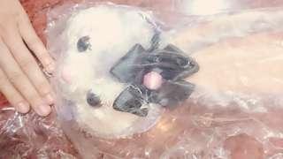 🚚 【全新】可愛史黛拉兔(黑色花朵) 票卡零錢包 代友售 約25×約12cm 迪士尼人物17/20