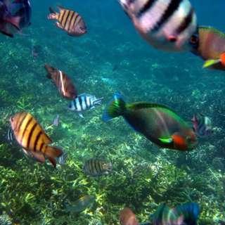 AMI Travel | 3D2N Snorkeling at Tenggol Island Beach Resort