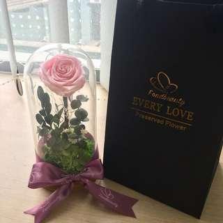 Preserved rose / terrarium / flower / pink rose / presents