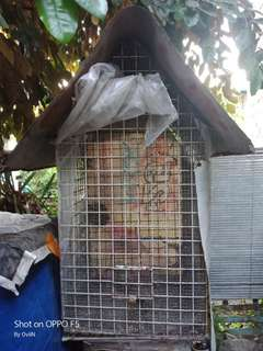Bird Cage for Finches