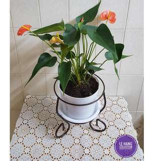 Plant Stand Shelf Rack For Indoor Or Balcony