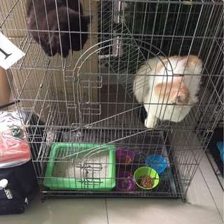 Cat Hotels for Raya