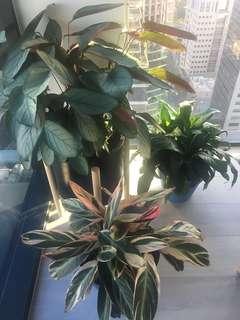 Indoor Plant Bundle