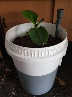 Self Watering Bucket