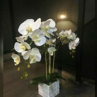 Artificial Orchid for Sale