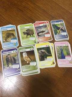 Wildlife Animal cards