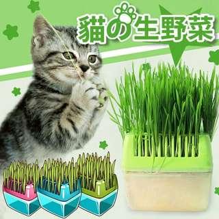🚚 貓草養殖盒