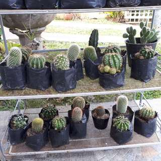 FOR SALE!! Cactus and Succulent