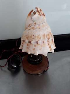 Hand made shell with light antics