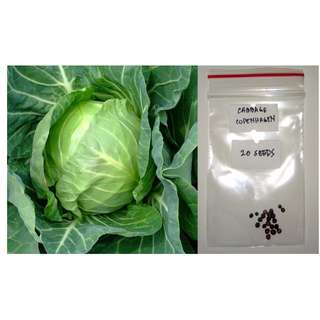 Cabbage Vegetable Seeds (Copenhagen)