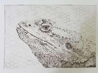 Bearded Dragon - Drypoint