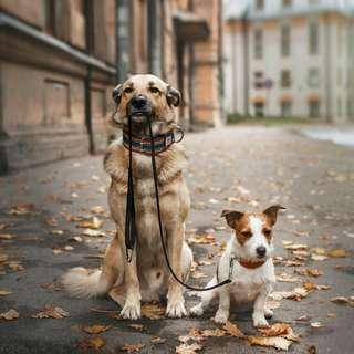 Dog Walker Services