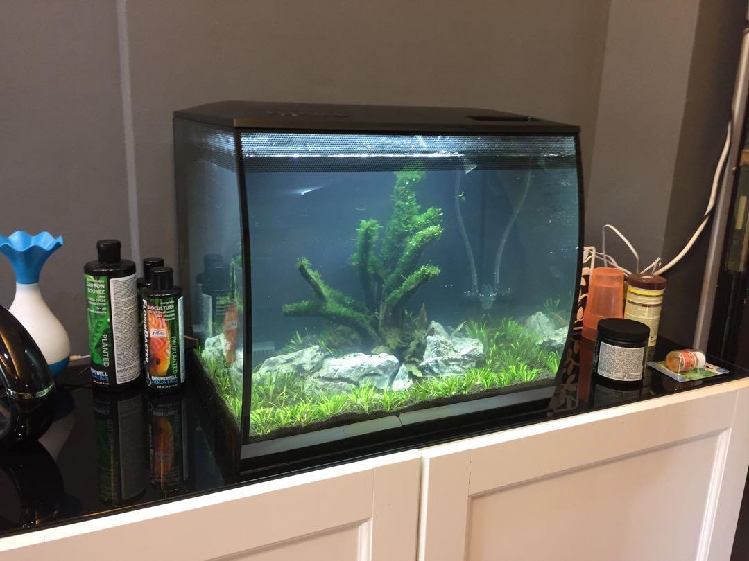 Fluval Flex 57L, Pet Supplies, For Fish, Fish Tanks on ...