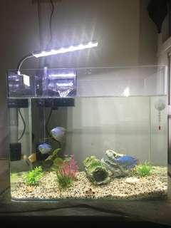 34x20x28.5魚缸 過濾+白燈 +(不包含魚跟裝飾 溫度計)