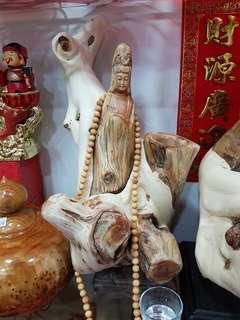 Thuja guan yin Buddha 崖柏
