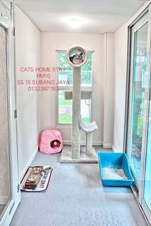 Cats home stay ss15