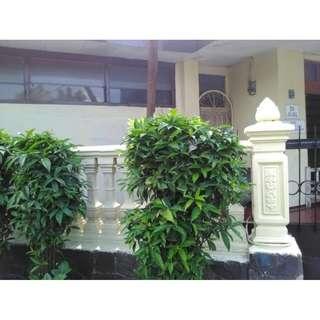 REDUCE PRICE....!  Rumah Strategis di sekelimus Bandung, bisa buat kosan