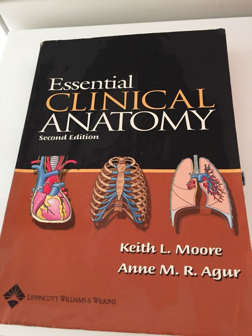 Luxury Keith Moore Anatomy Gallery - Anatomy and Physiology Tissue ...