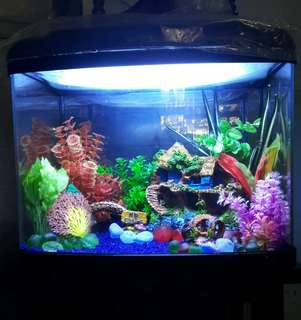 HAILEA Aquarium Set (Acrylic Glass)