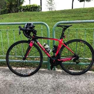 Cipolini Carbon Frame Size 46 XS for Sale