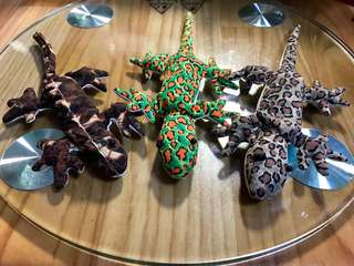 Lizard Soft toy with insect repelling feature - 3 for SGD5
