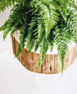 Plant stand with fern