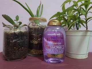 Ogx Sensually soft + Tsunami blossom shampoo