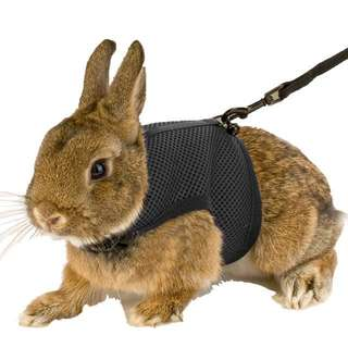 Small animal harness with leash