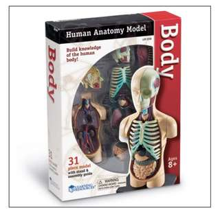 Learning Resources Human Anatomy Model