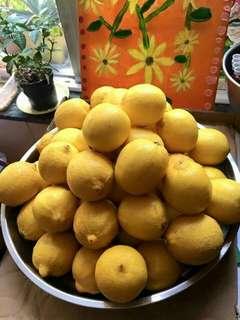 川貝陳皮燉檸檬