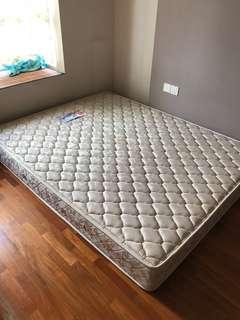 Seahorse Queen mattress