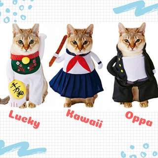 CAT FUNNY CLOTHES (Lucky, Kawaii & Oppa Style!)