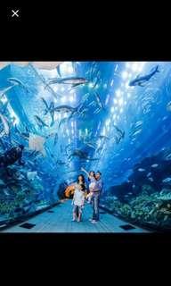 Sea Aquarium Sentosa 6 and 7 June