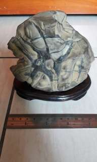 魚造型龜甲石