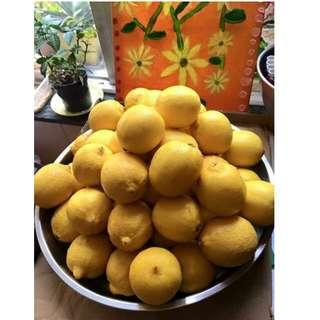 老陳皮冰糖燉檸檬膏: $140 加強版 川貝新鮮檸檬