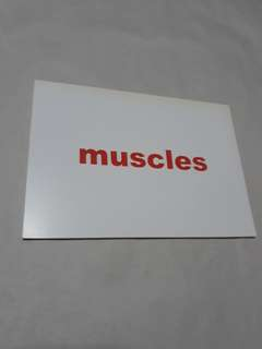Flash cards - Muscles